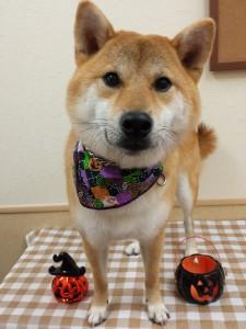 2014-10-29-13-08-31_photo