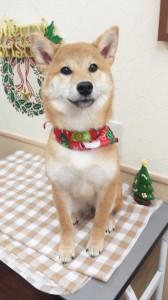 2014-12-10-12-36-42_photo