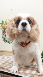 2014-12-13-14-58-09_photo