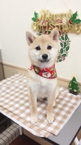 2014-12-20-11-58-58_photo