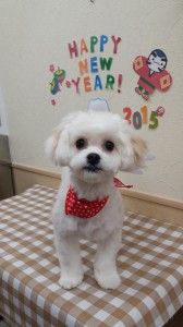 2015-01-10-15-18-15_photo