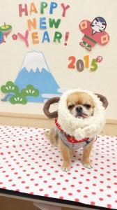2015-01-31-15-15-48_photo