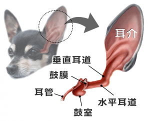 gaiji-anatomy